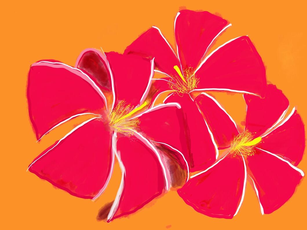 私の大好きな花